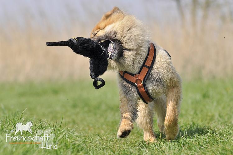 Fotowettbewerb Platz 4  Freundschaft Hund & Kimba ~ X Geschirr Hund