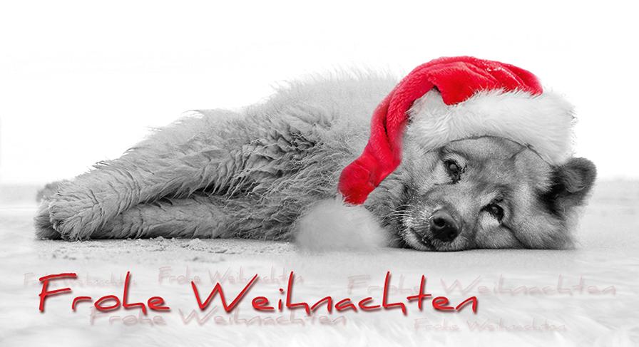 frohe weihnachten kimba ein hund wie kein anderer. Black Bedroom Furniture Sets. Home Design Ideas